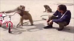 Best Funny Video Clips # 1 Funny Fails Funny Animals Funny Pranks & Jokes