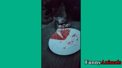 Funny Cats Stealing Food Compilation 2017 - Funniest Cat Videos Ever!