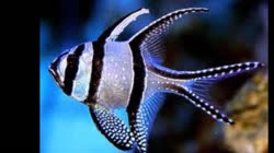 Top 10 beautiful fish in the world !!Top 10