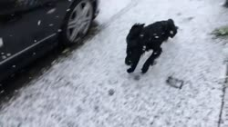 Truffle the dog experiences snow for the first time